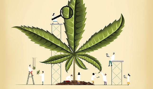 Cannabis clinic